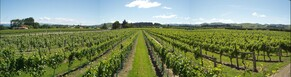Martinborough in Summertime - The Insiders Guide
